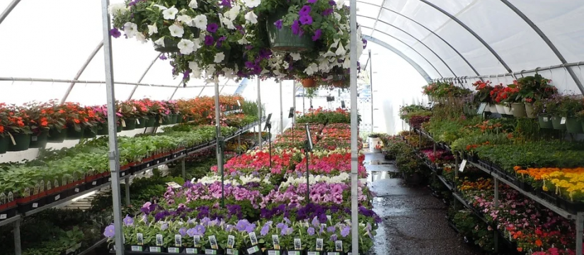 At VIVEROS SOLER we specialise in the wholesale of plants for nurseries